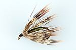 Cal-bird-brown-creeper