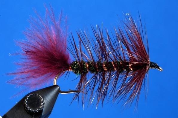 Bronze and Black Woolly Worm 2